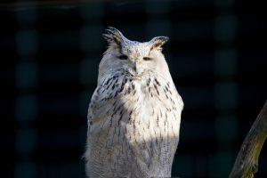 Owl looking sceptic.